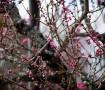 春がそこまで来てます。嗚呼、嬉し
